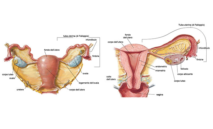 Prevenzione del tumore del collo dell'utero